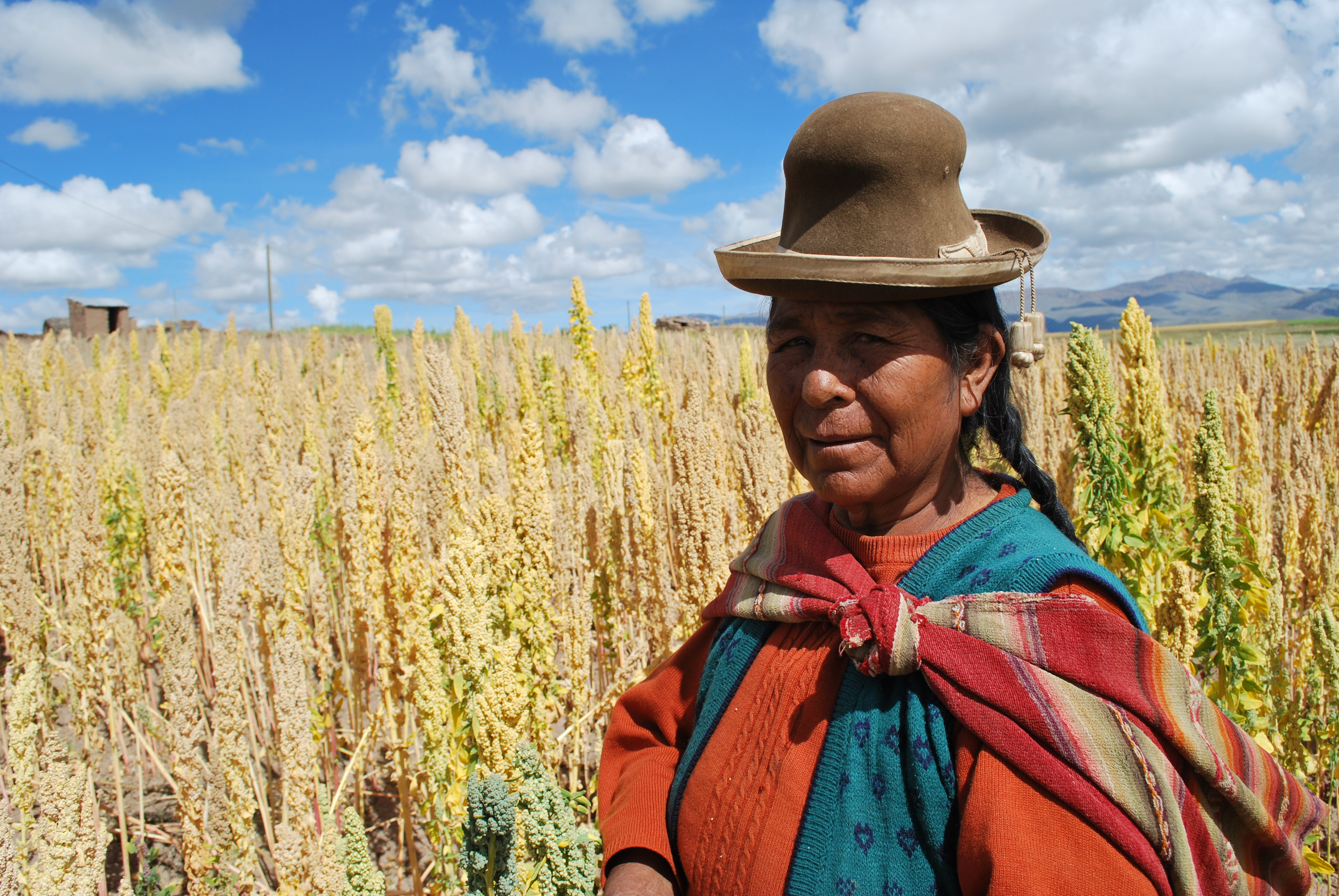 "Figure 2: Bolivian farmer in Quinoa field. Image: {a href=""https://www.flickr.com/photos/bioversity/6673223343/in/photolist-baG1NT-rUM6V4-baCbk4-dPxEty-6anLWD-muoNsR-f56NGm-6W8qU3-9o6E8P-6anLWr-6arXby-qQWmGv-qQWwmR-qQSth4-qQMfFG-66haf3-r8hmCS-r8fvRA-qQWk3P-qQWs78-r8drxP-ds6qo6-6anLWk-6WZVV6-bzwY4b-oHJQPj-""}Bioversity International{/a}"