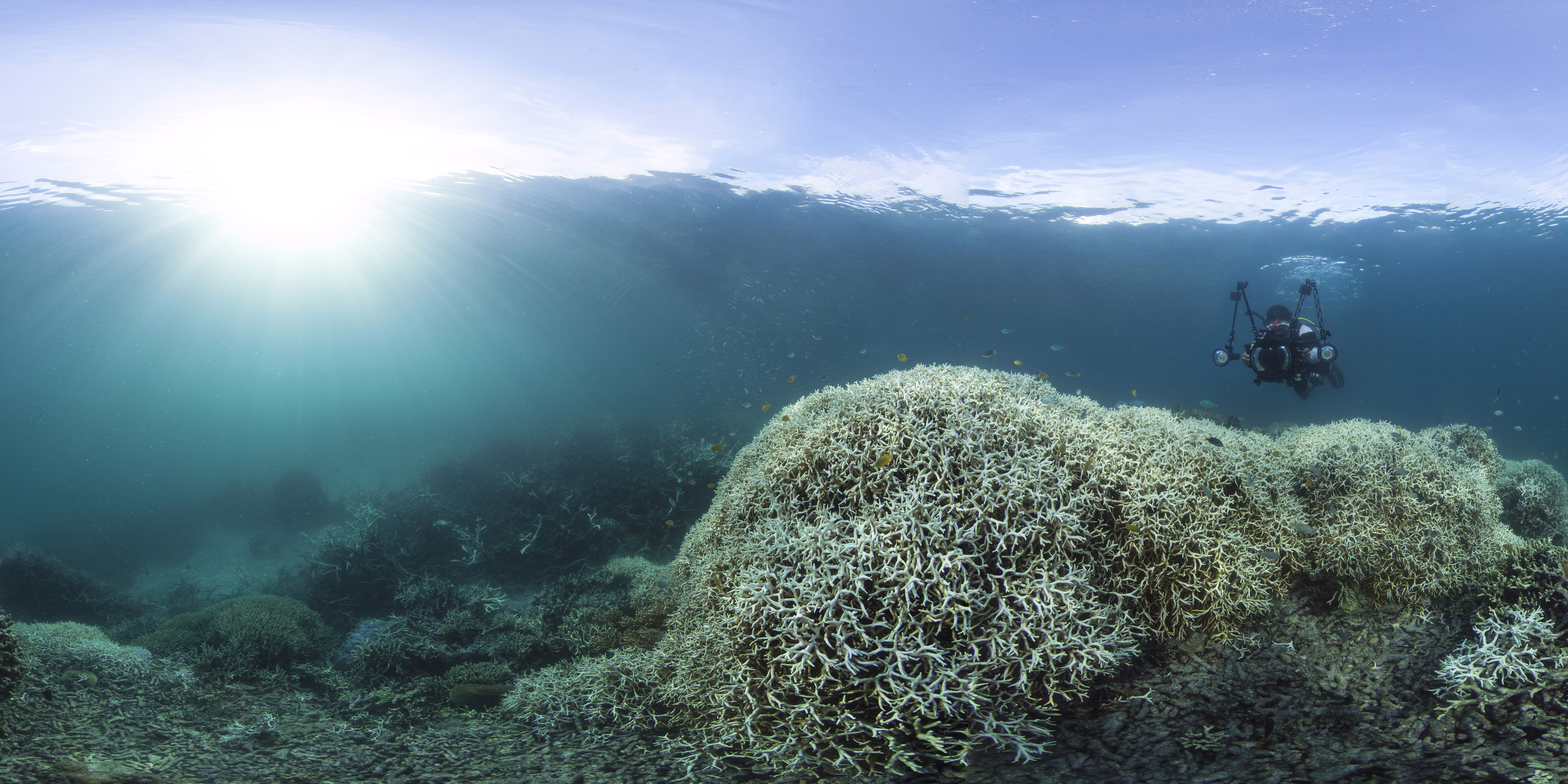Bleached Corals off Lizard Island in March 2016. Credit: XL Catlin Seaview Survey