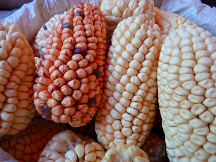 corn-43258_1920